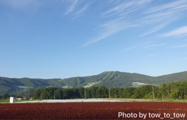 菅平のレタス畑